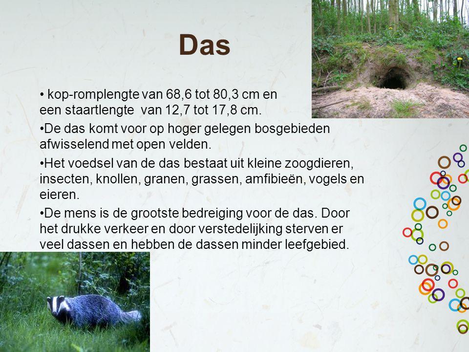 Das kop-romplengte van 68,6 tot 80,3 cm en een staartlengte van 12,7 tot 17,8 cm. De das komt voor op hoger gelegen bosgebieden afwisselend met open v