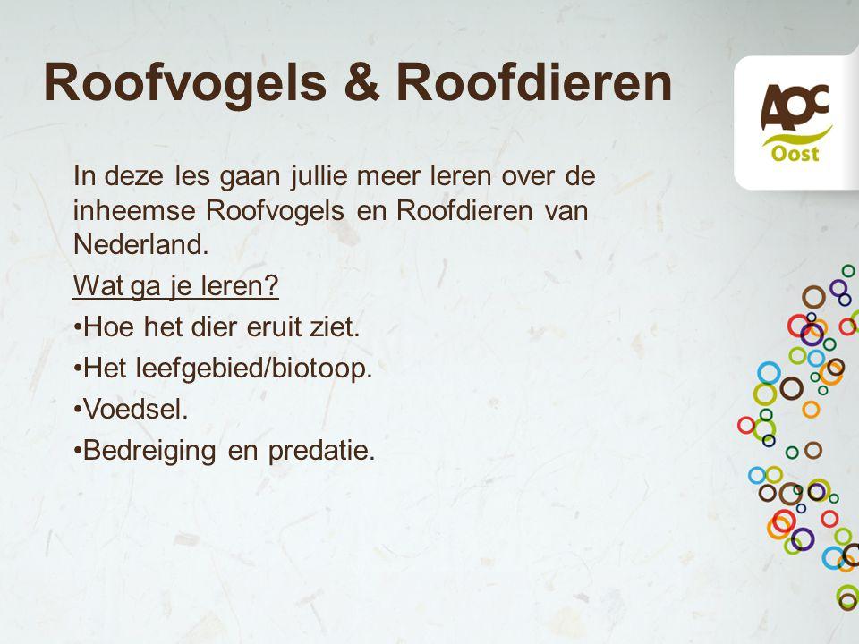 Roofvogels & Roofdieren In deze les gaan jullie meer leren over de inheemse Roofvogels en Roofdieren van Nederland. Wat ga je leren? Hoe het dier erui