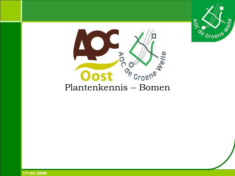 Plantenkennis Acer negundo - vederesdoorn Hoogte: 12-15 m Bloem: rood geel.
