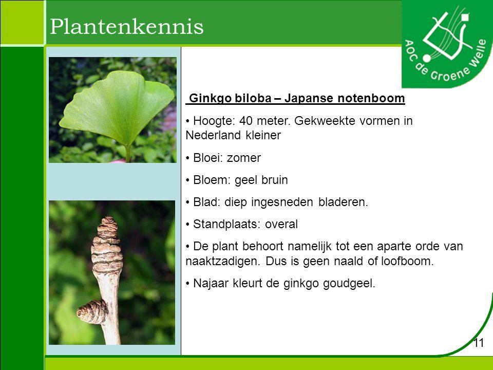 Plantenkennis Prunus avium - zoetekers Hoogte: 20 meter.