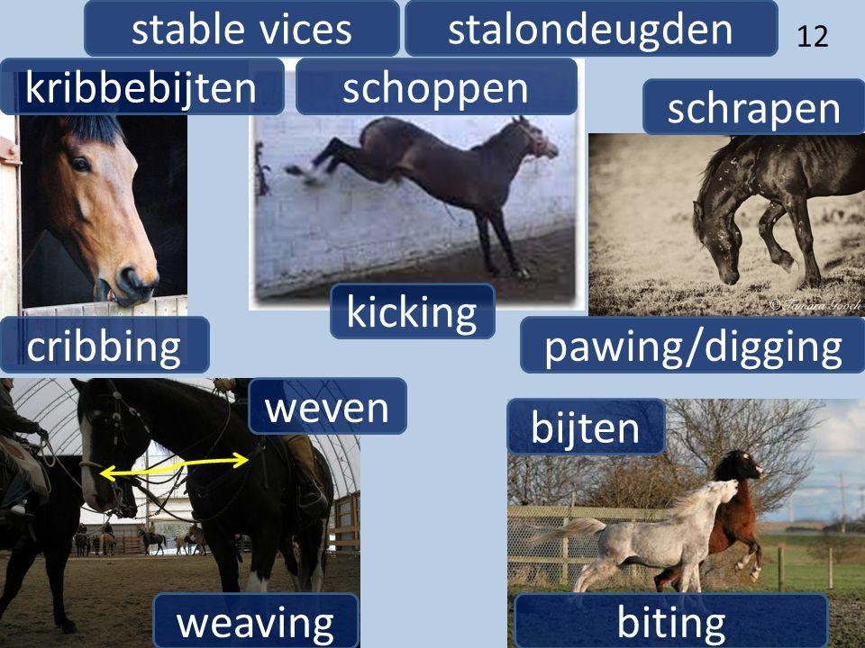 12 stalondeugdenstable vices kribbebijten cribbing biting bijten pawing/digging schrapen weaving weven schoppen kicking