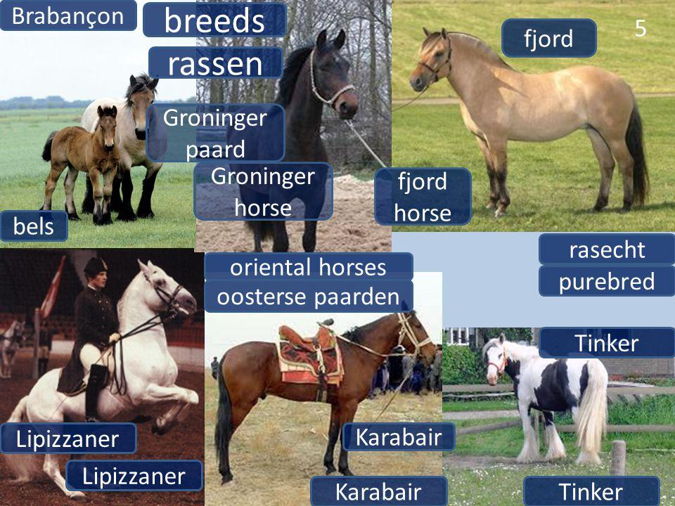 5 breeds rassen Brabançon bels fjord fjord horse Groninger horse Lipizzaner Tinker oriental horses oosterse paarden Karabair purebred rasecht Lipizzan