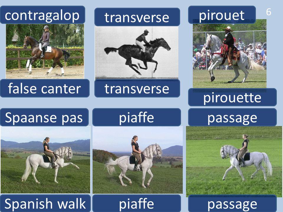 false canter contragalop Spanish walk Spaanse pas 6 passage piaffe transverse pirouette pirouet