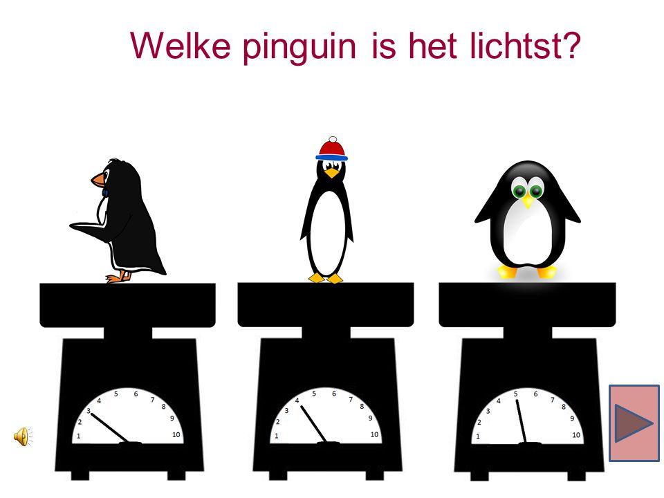 Welke pinguin is het lichtst