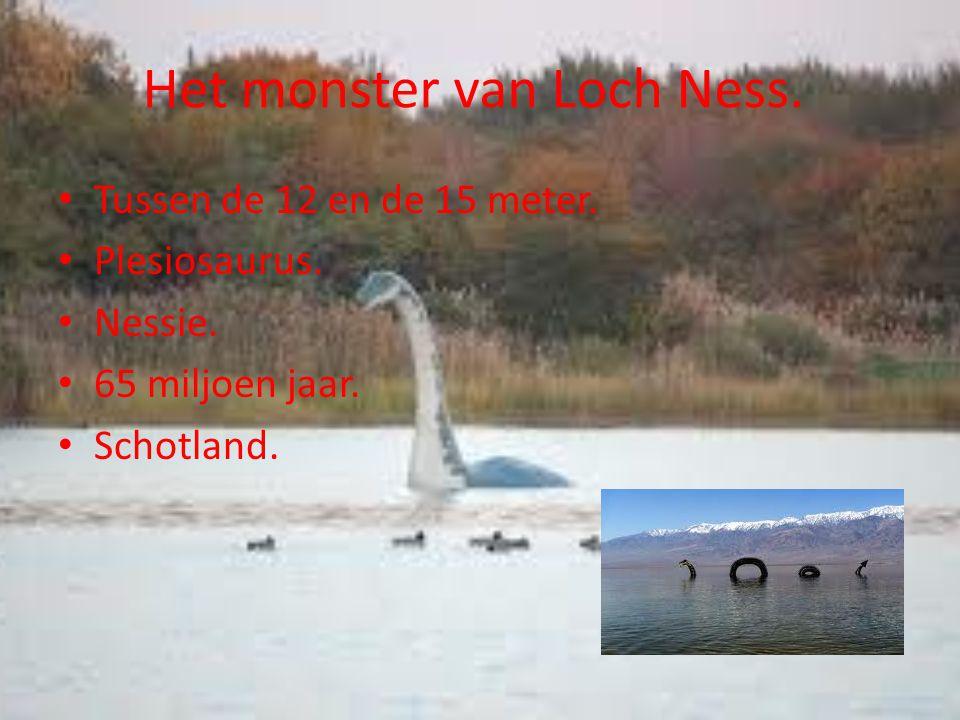 Het monster van Loch Ness. Tussen de 12 en de 15 meter.