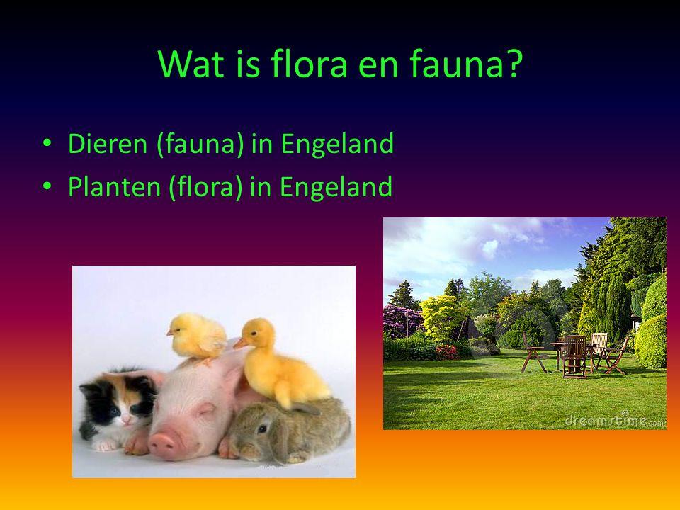Wat is flora en fauna? Dieren (fauna) in Engeland Planten (flora) in Engeland
