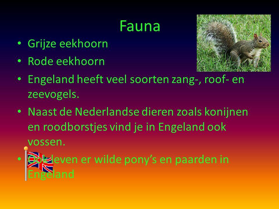 Fauna Grijze eekhoorn Rode eekhoorn Engeland heeft veel soorten zang-, roof- en zeevogels. Naast de Nederlandse dieren zoals konijnen en roodborstjes