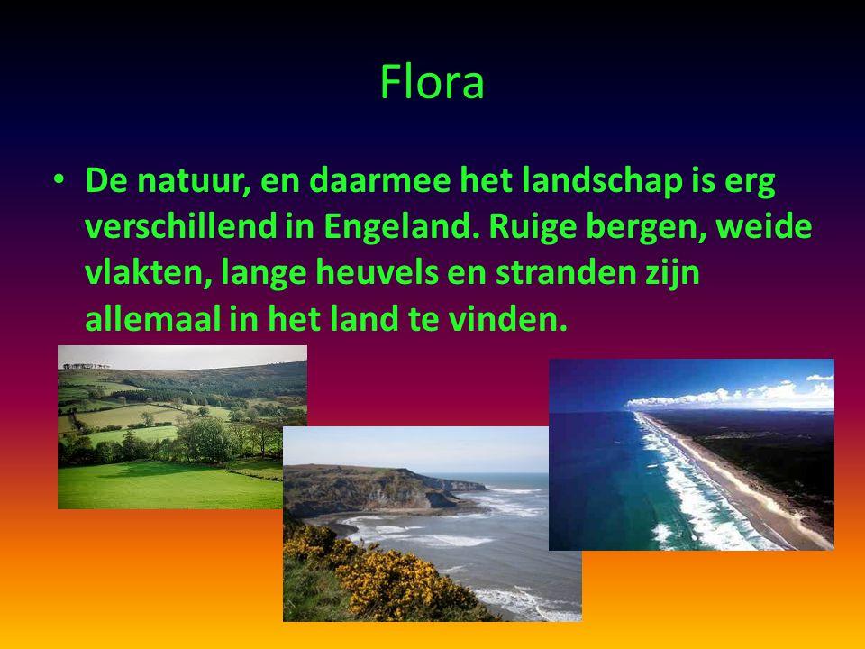Flora De natuur, en daarmee het landschap is erg verschillend in Engeland. Ruige bergen, weide vlakten, lange heuvels en stranden zijn allemaal in het