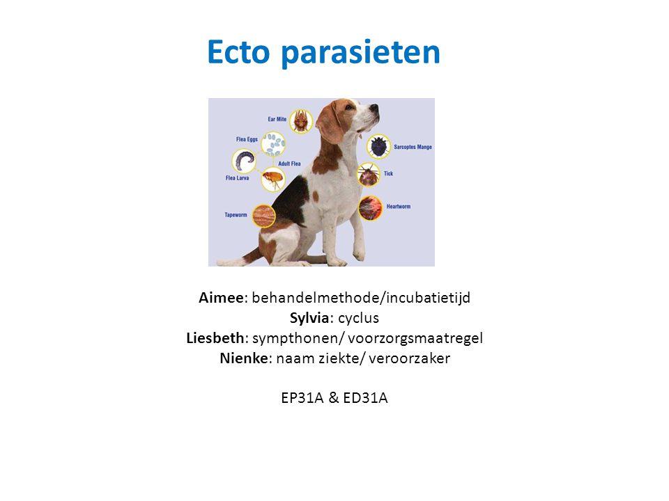 Ecto parasieten Aimee: behandelmethode/incubatietijd Sylvia: cyclus Liesbeth: sympthonen/ voorzorgsmaatregel Nienke: naam ziekte/ veroorzaker EP31A & ED31A