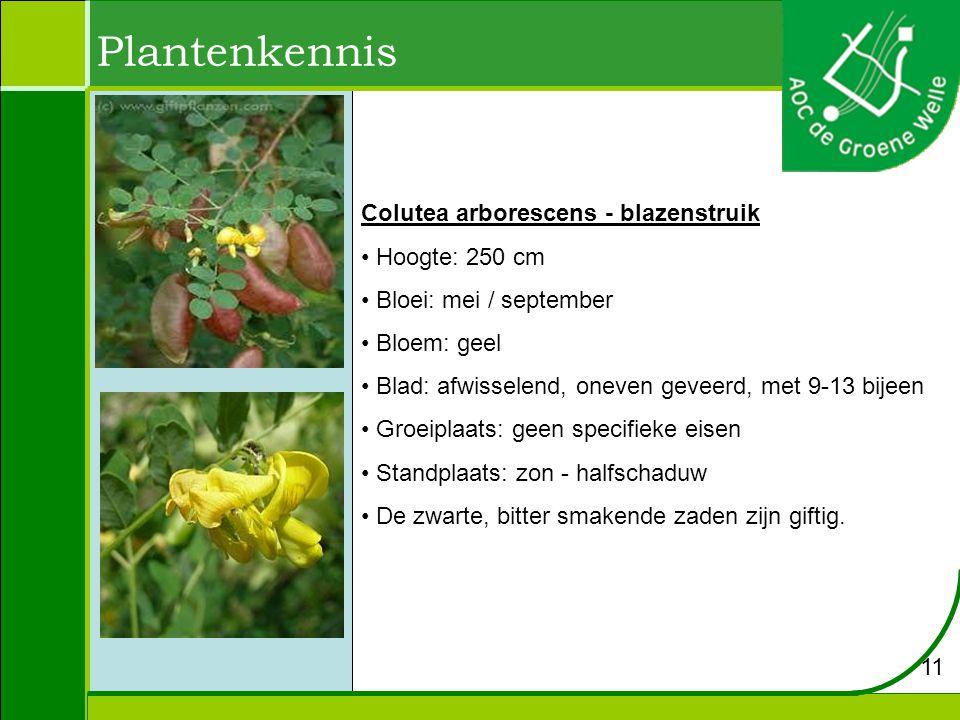 Plantenkennis Colutea arborescens - blazenstruik Hoogte: 250 cm Bloei: mei / september Bloem: geel Blad: afwisselend, oneven geveerd, met 9-13 bijeen Groeiplaats: geen specifieke eisen Standplaats: zon - halfschaduw De zwarte, bitter smakende zaden zijn giftig.