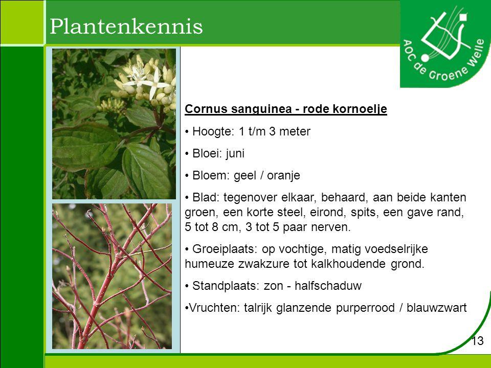 Plantenkennis Cornus sanguinea - rode kornoelje Hoogte: 1 t/m 3 meter Bloei: juni Bloem: geel / oranje Blad: tegenover elkaar, behaard, aan beide kanten groen, een korte steel, eirond, spits, een gave rand, 5 tot 8 cm, 3 tot 5 paar nerven.