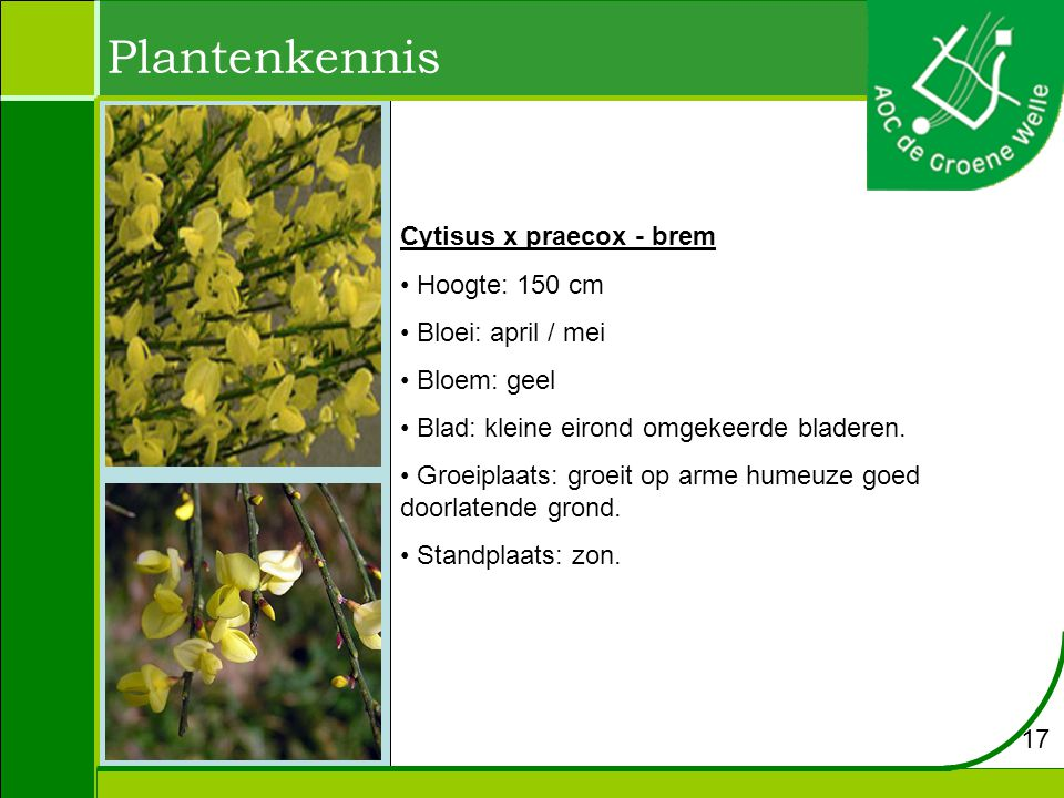 Plantenkennis Cytisus x praecox - brem Hoogte: 150 cm Bloei: april / mei Bloem: geel Blad: kleine eirond omgekeerde bladeren.