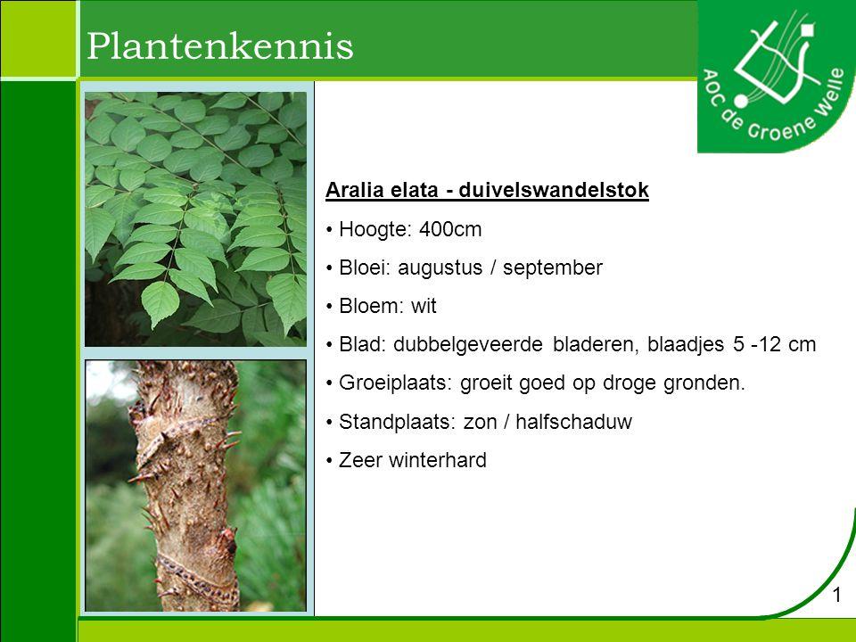 Plantenkennis Aralia elata - duivelswandelstok Hoogte: 400cm Bloei: augustus / september Bloem: wit Blad: dubbelgeveerde bladeren, blaadjes 5 -12 cm Groeiplaats: groeit goed op droge gronden.