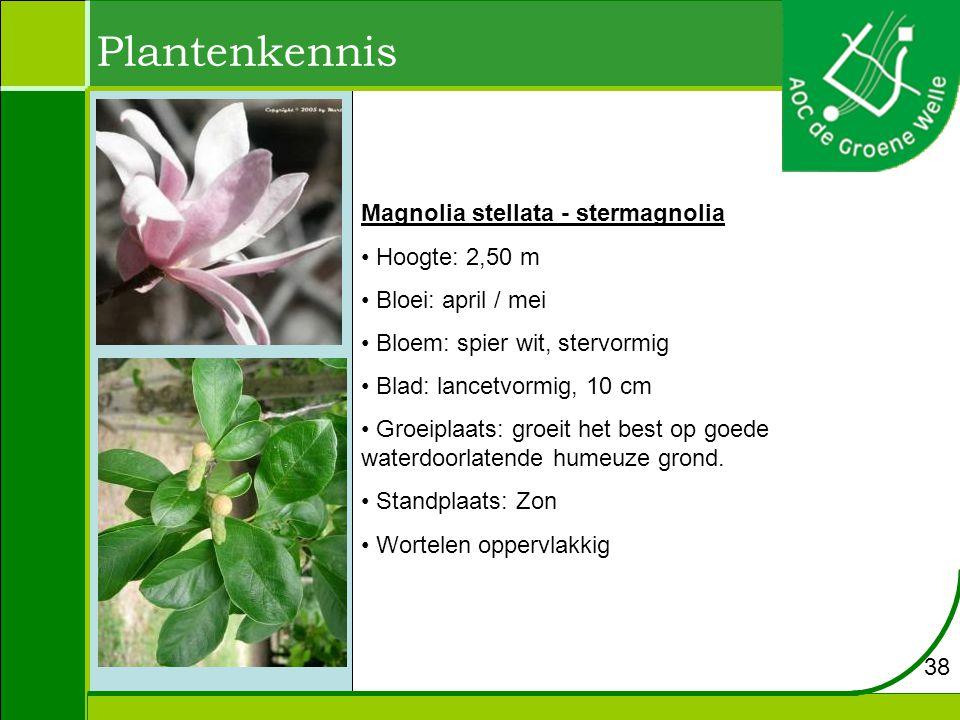 Plantenkennis Magnolia stellata - stermagnolia Hoogte: 2,50 m Bloei: april / mei Bloem: spier wit, stervormig Blad: lancetvormig, 10 cm Groeiplaats: groeit het best op goede waterdoorlatende humeuze grond.