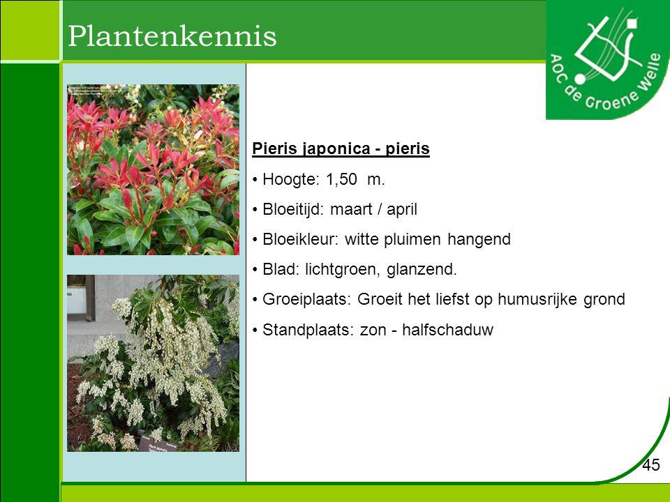 Plantenkennis 45 Pieris japonica - pieris Hoogte: 1,50 m.