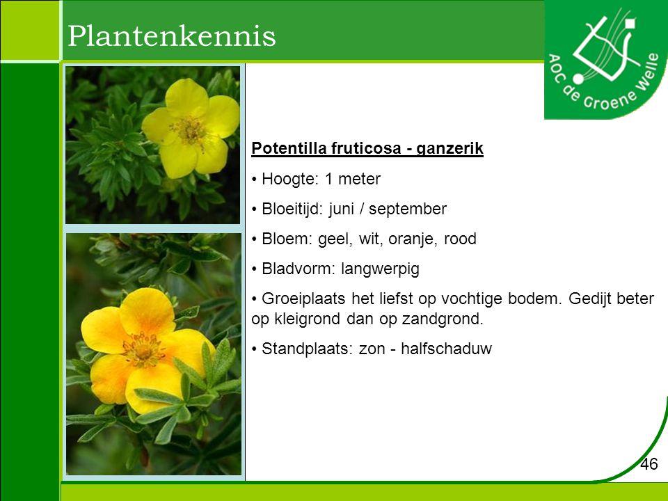 Plantenkennis Potentilla fruticosa - ganzerik Hoogte: 1 meter Bloeitijd: juni / september Bloem: geel, wit, oranje, rood Bladvorm: langwerpig Groeiplaats het liefst op vochtige bodem.