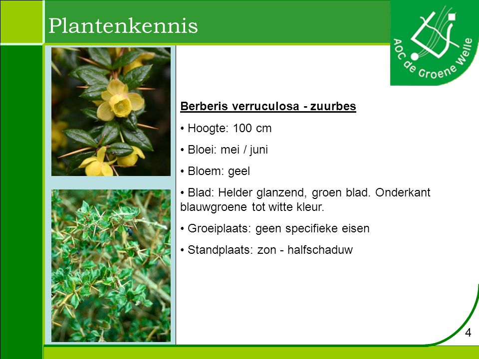 Plantenkennis Lavandula angustifolia - lavendel Hoogte: 30 tot 40 cm Bloei: juni - augustus Bloem: paars Blad: lancetvormig en grijs tot groen van kleur Groeiplaats: Is vooral geschikt voor wat droge, maar humusrijke grond.