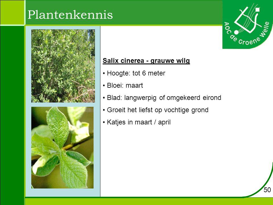 Plantenkennis Salix cinerea - grauwe wilg Hoogte: tot 6 meter Bloei: maart Blad: langwerpig of omgekeerd eirond Groeit het liefst op vochtige grond Katjes in maart / april 50