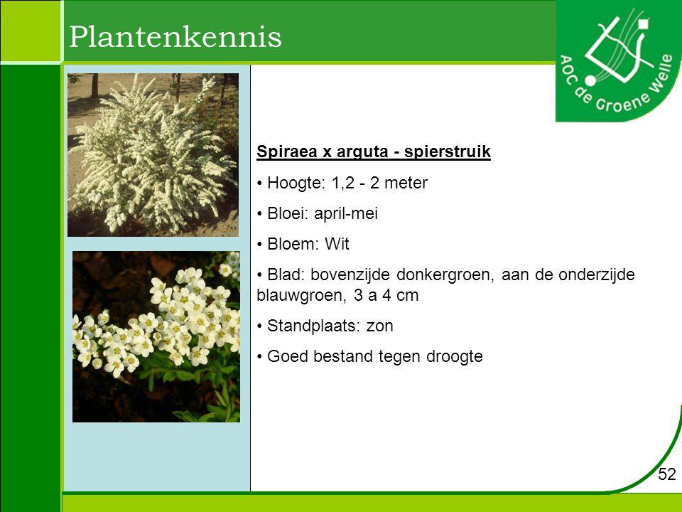 Plantenkennis Spiraea x arguta - spierstruik Hoogte: 1,2 - 2 meter Bloei: april-mei Bloem: Wit Blad: bovenzijde donkergroen, aan de onderzijde blauwgroen, 3 a 4 cm Standplaats: zon Goed bestand tegen droogte 52
