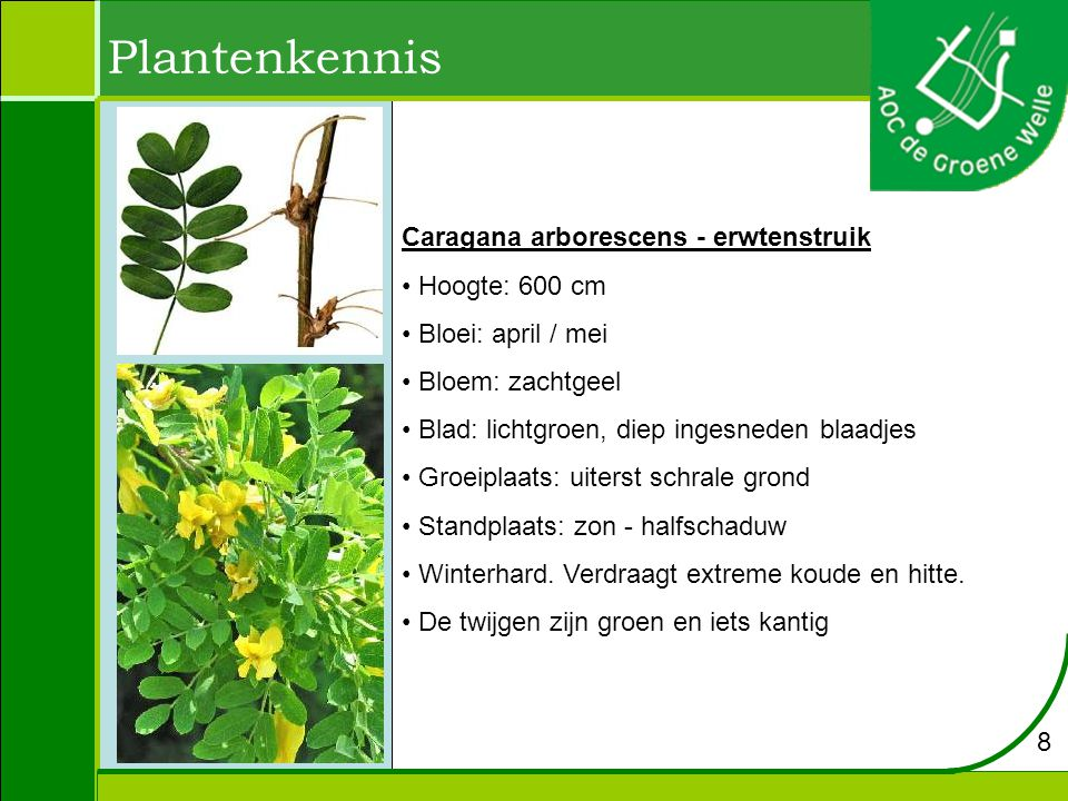Plantenkennis Hydrangea macrophylla - hortensia Hoogte: 1 tot 3 meter.