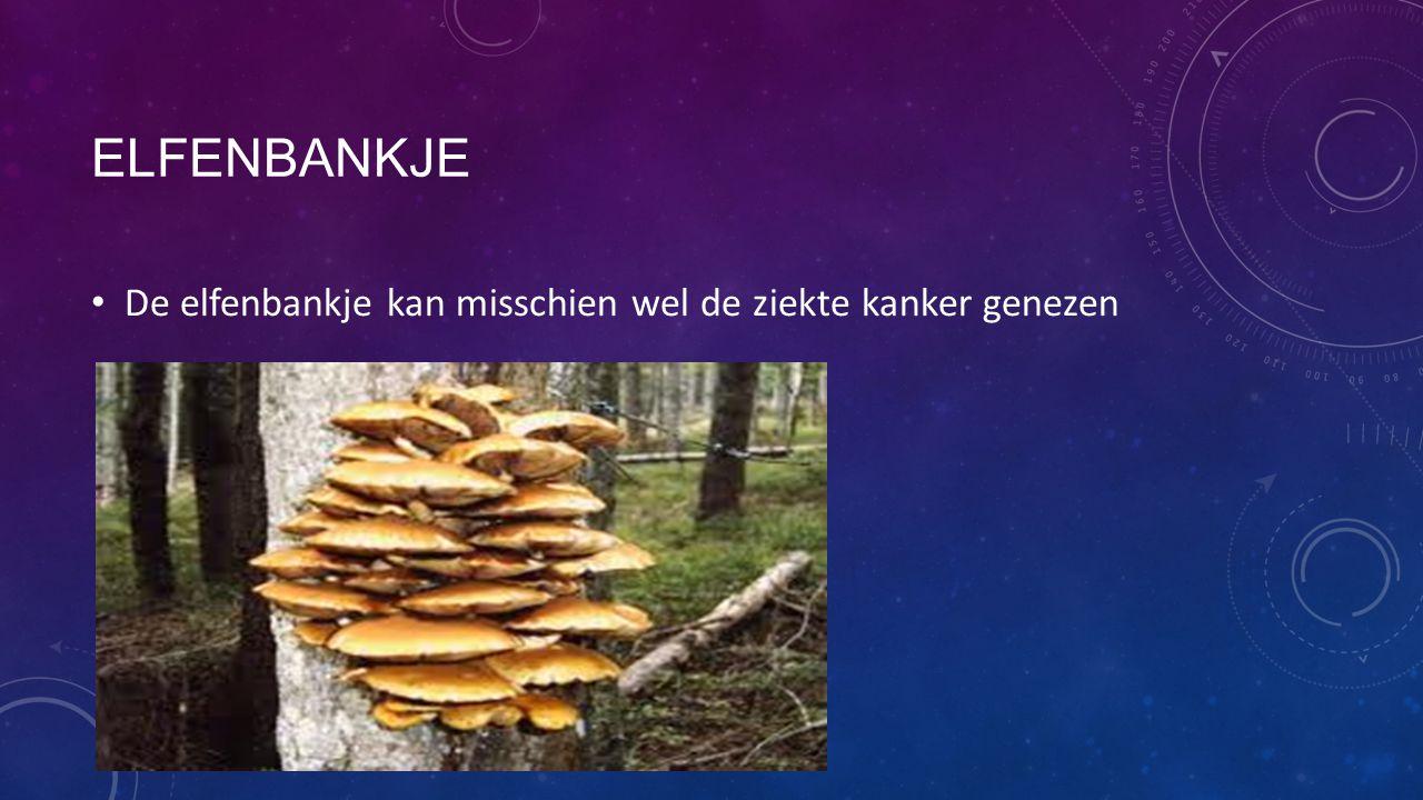 ELFENBANKJE De elfenbankje kan misschien wel de ziekte kanker genezen