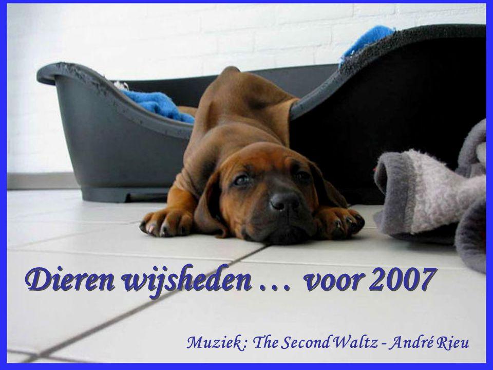 Dieren wijsheden … voor 2007 Dieren wijsheden … voor 2007 Muziek : The Second Waltz - André Rieu