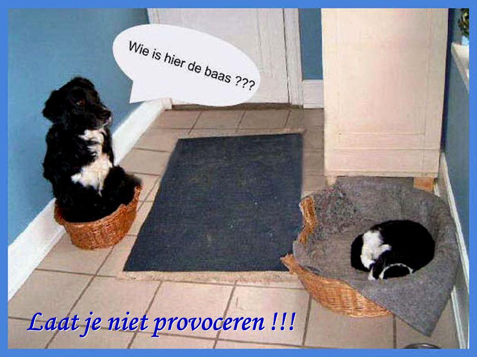 Laat je niet provoceren !!! Laat je niet provoceren !!!