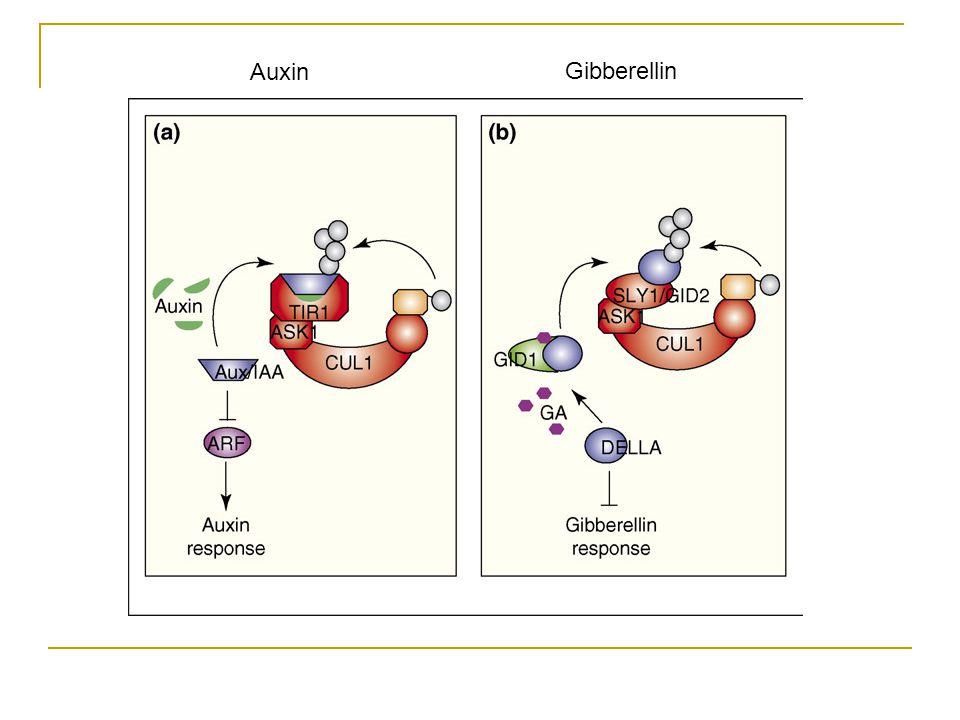 Hpt; histidine phosphotransfer protein Two component receptors (ethylene and cytokinin) Negative regulatorPositive regulator
