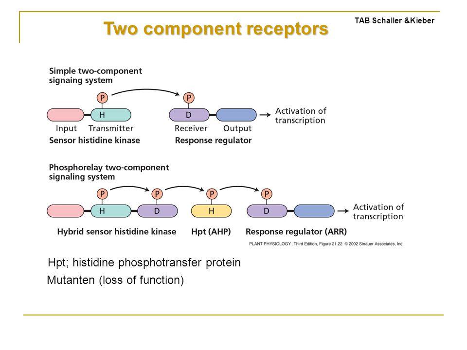 Two component receptors TAB Schaller &Kieber Hpt; histidine phosphotransfer protein Mutanten (loss of function)