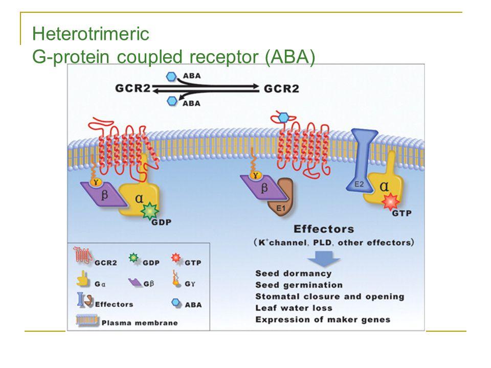 Heterotrimeric G-protein coupled receptor (ABA)