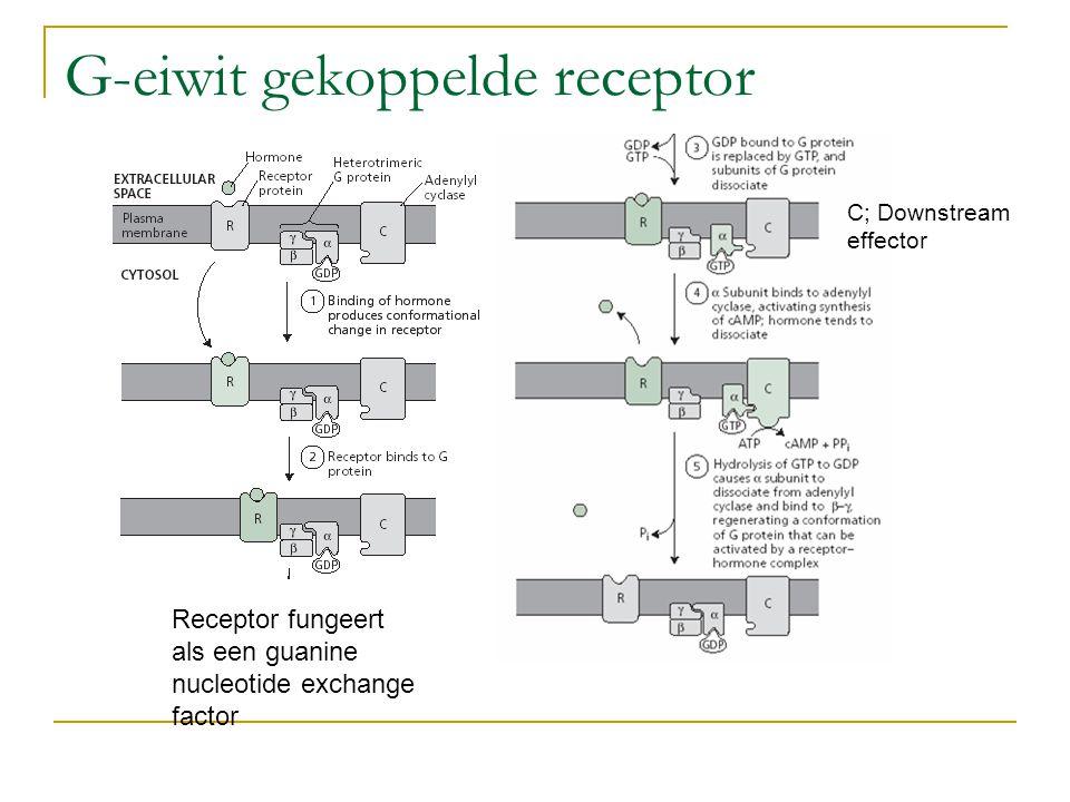 G-eiwit gekoppelde receptor Receptor fungeert als een guanine nucleotide exchange factor C; Downstream effector