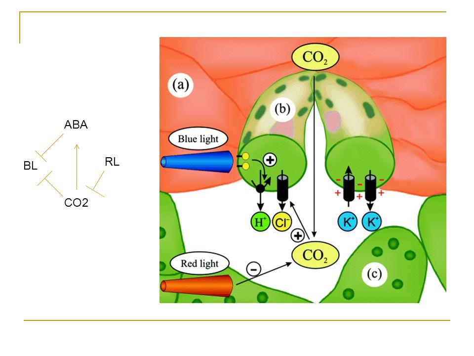 ABA CO2 BL RL