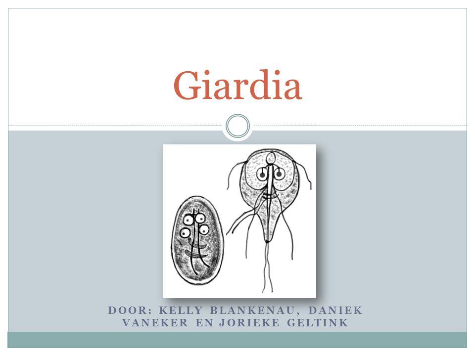 DOOR: KELLY BLANKENAU, DANIEK VANEKER EN JORIEKE GELTINK Giardia