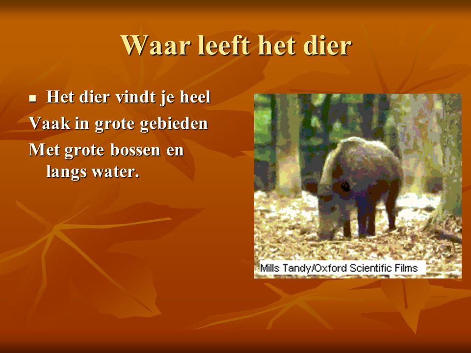 Waar leeft het dier Het dier vindt je heel Het dier vindt je heel Vaak in grote gebieden Met grote bossen en langs water.