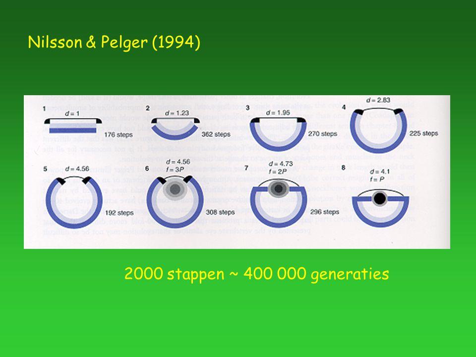 Nilsson & Pelger (1994) 2000 stappen ~ 400 000 generaties