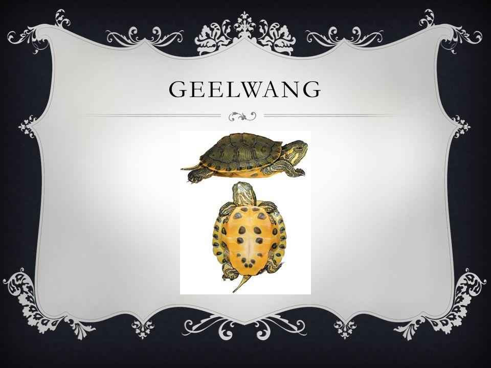 GEELWANG
