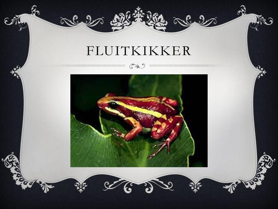 FLUITKIKKER