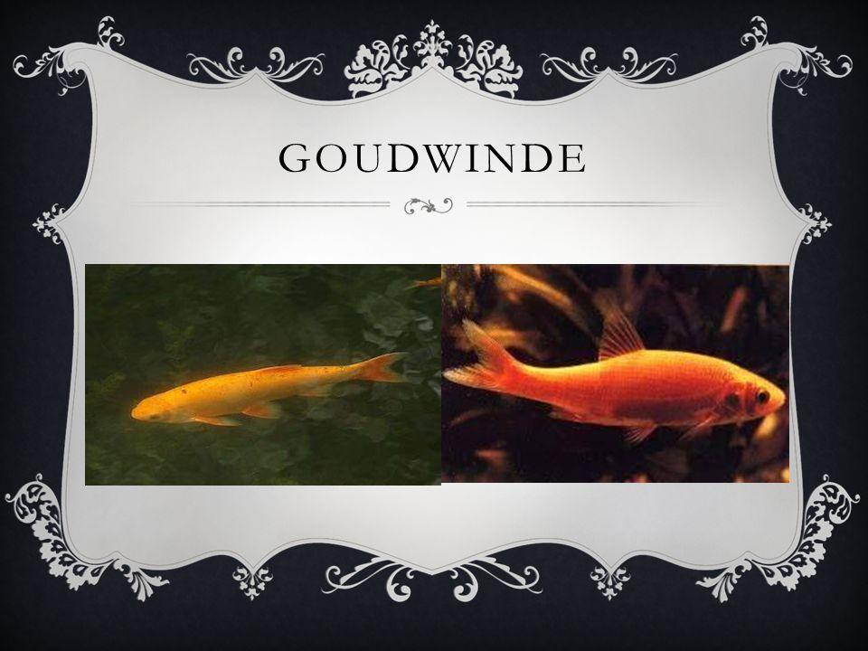 GOUDWINDE