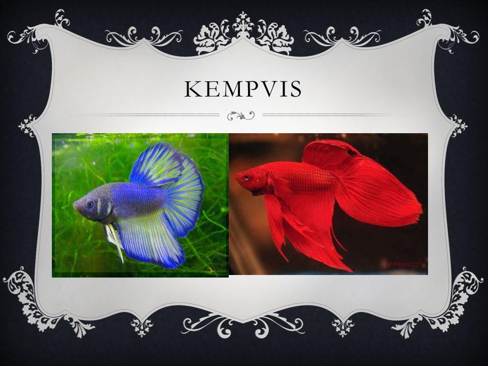 KEMPVIS