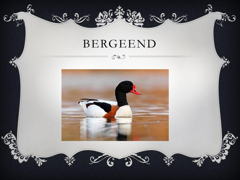 BERGEEND