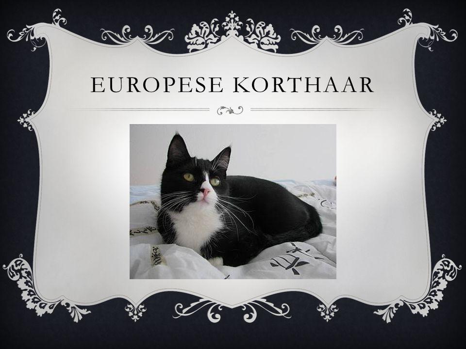 EUROPESE KORTHAAR