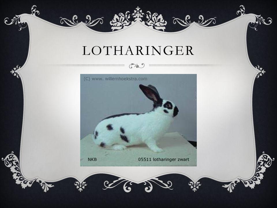 LOTHARINGER