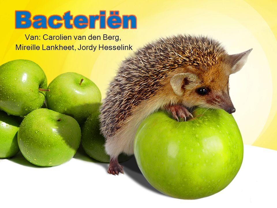 Inhoudsopgave: bacteriën Goede en slechte bacteriën Ziektes Ziekte van Weil Verloop ziekte Symptomen Behandeling