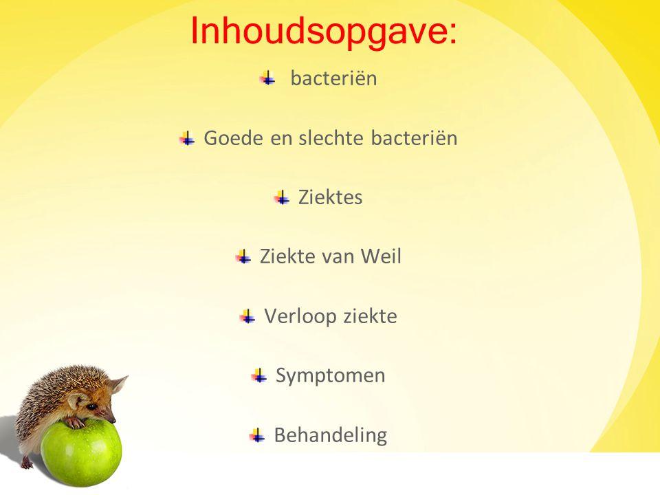 Bacteriën Bacterien zijn eencellige organismen.