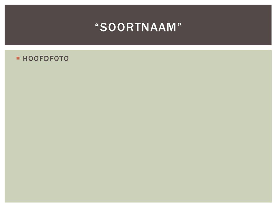 " HOOFDFOTO ""SOORTNAAM"""