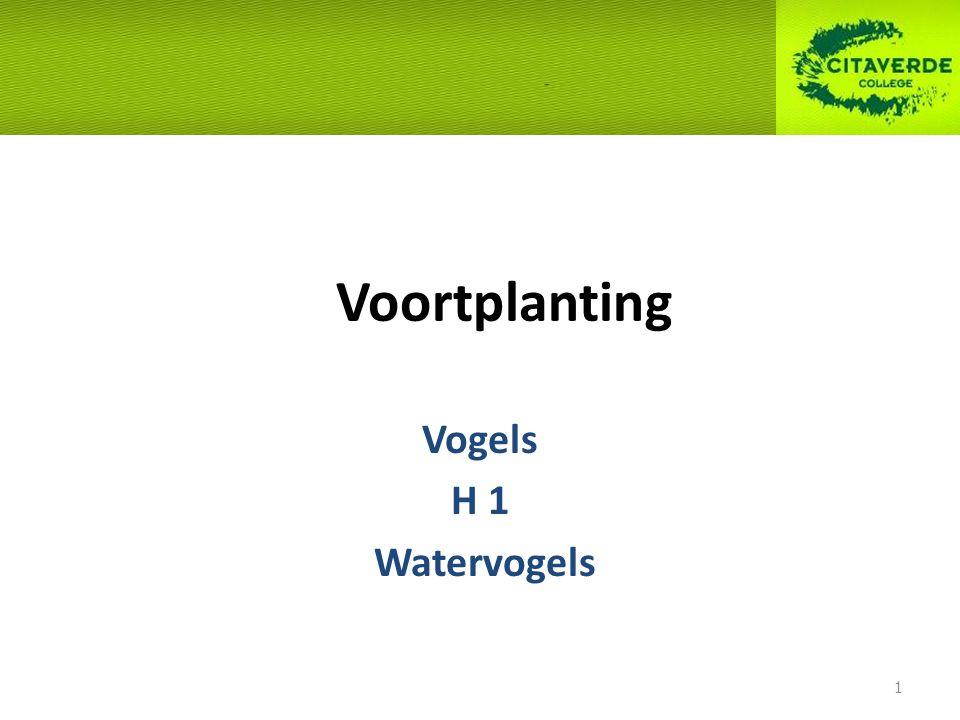 Voortplanting Vogels H 1 Watervogels 1