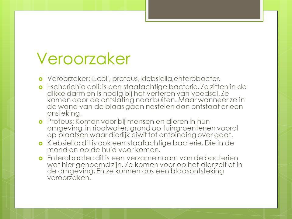 Veroorzaker  Veroorzaker: E.coli, proteus, klebsiella,enterobacter.