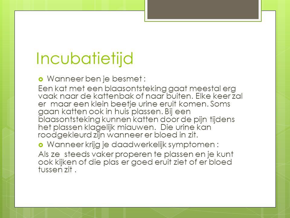 Incubatietijd  Wanneer ben je besmet : Een kat met een blaasontsteking gaat meestal erg vaak naar de kattenbak of naar buiten.