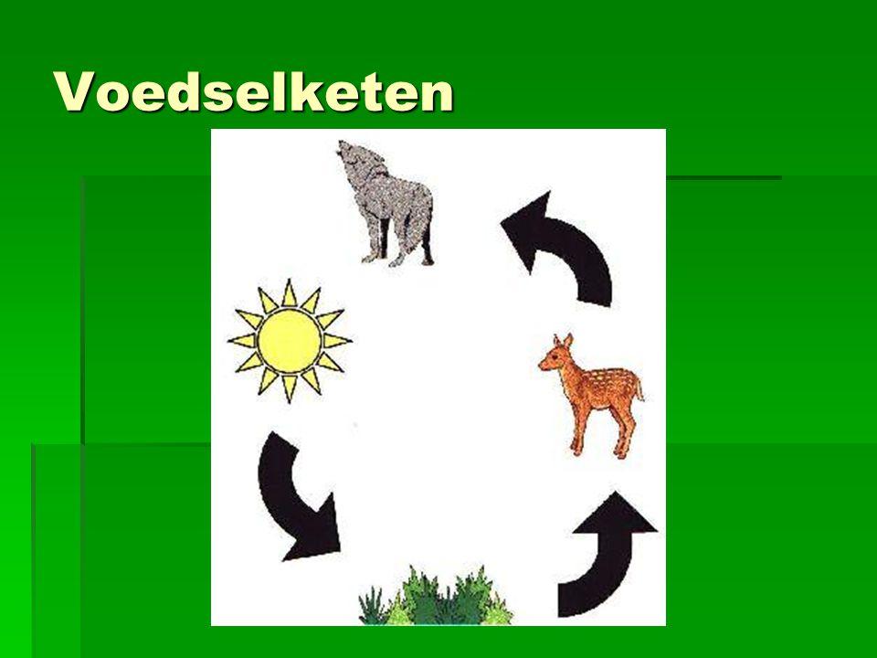 Voedselketen