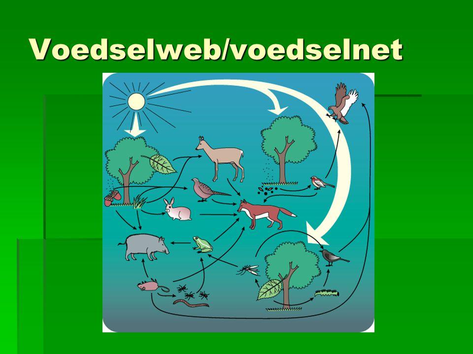 Voedselweb/voedselnet